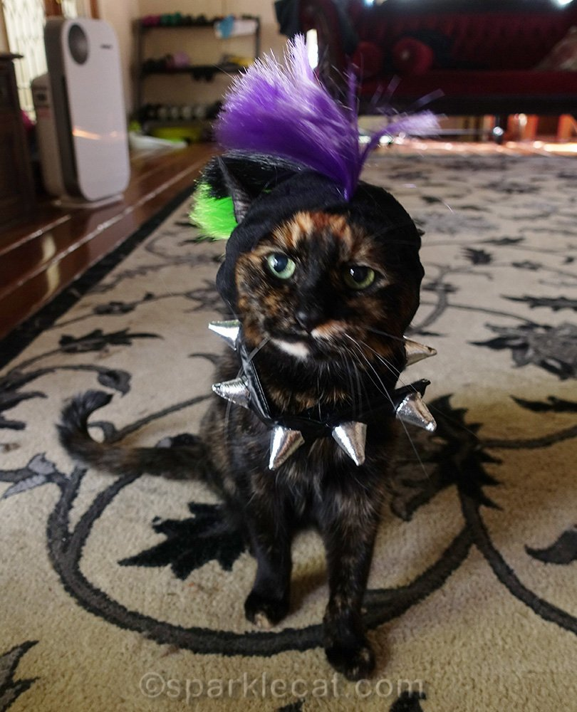 tortoiseshell cat wearing a punk rock costume
