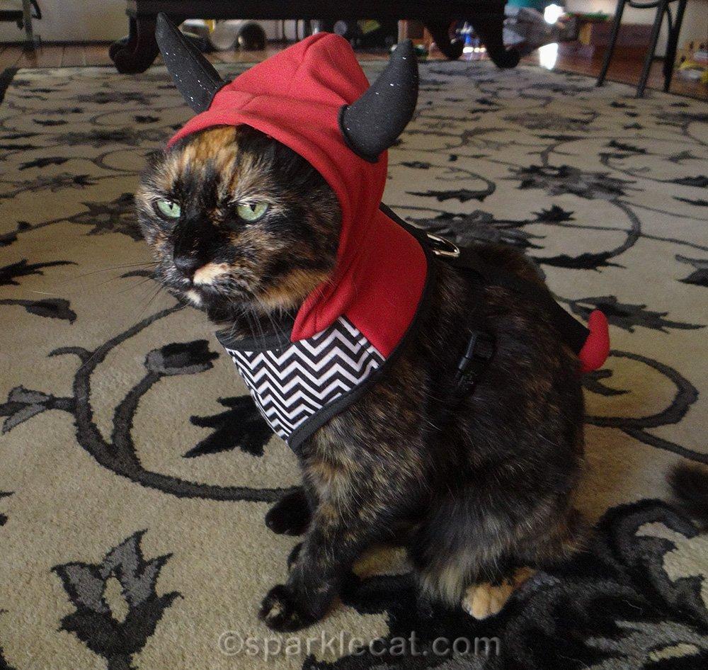 tortoiseshell cat in devil harness