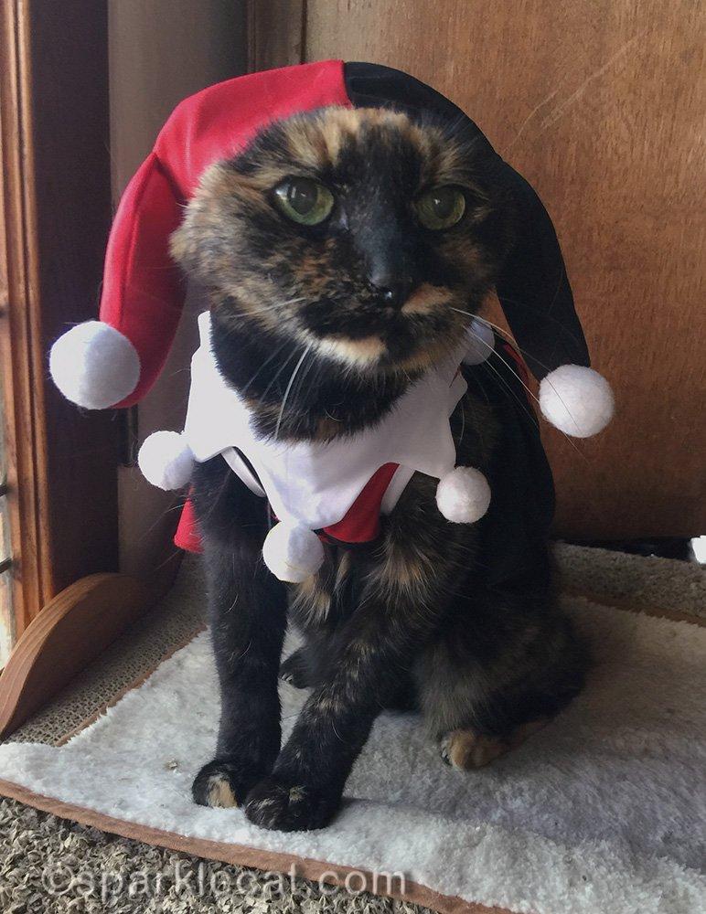 tortoiseshell cat in Harley Quinn costume