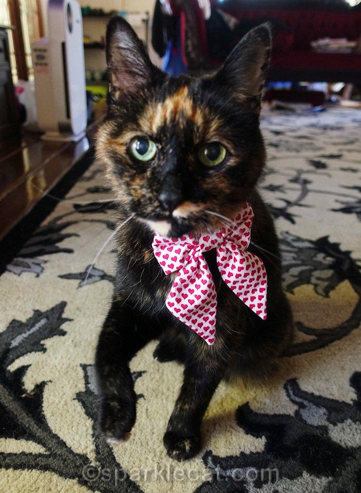 tortoiseshell cat wearing crooked bow tie