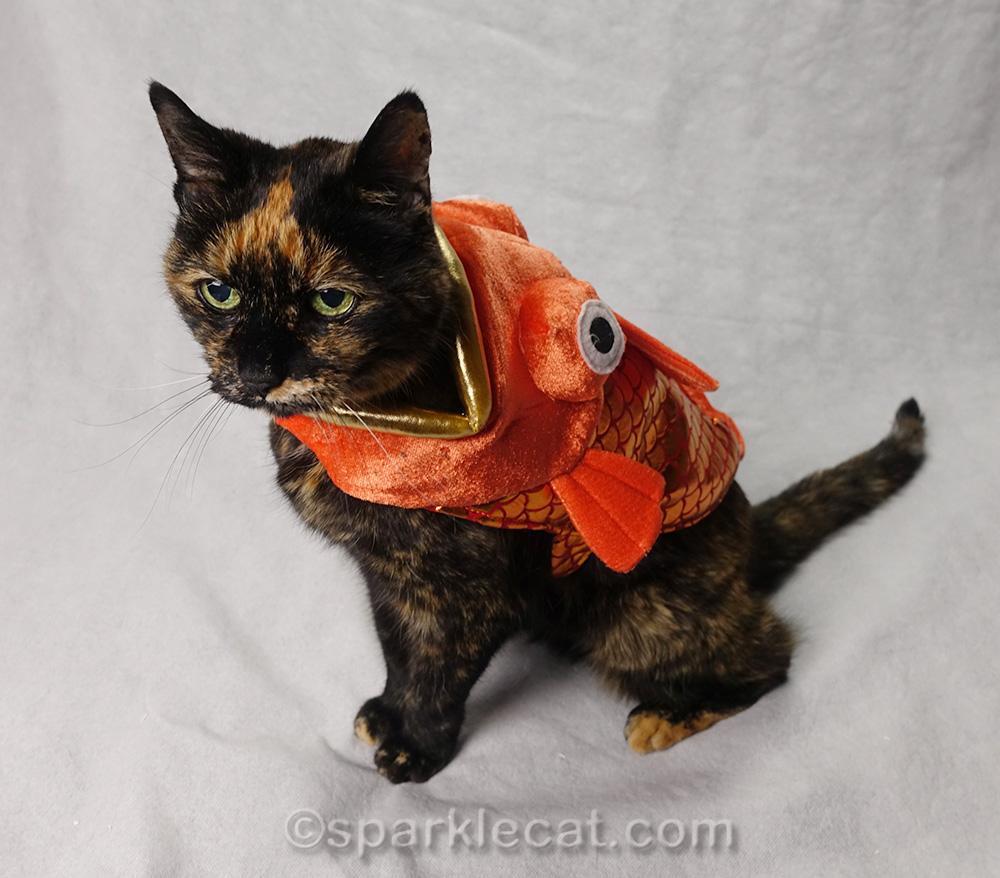 tortoiseshell cat wearing fish costume
