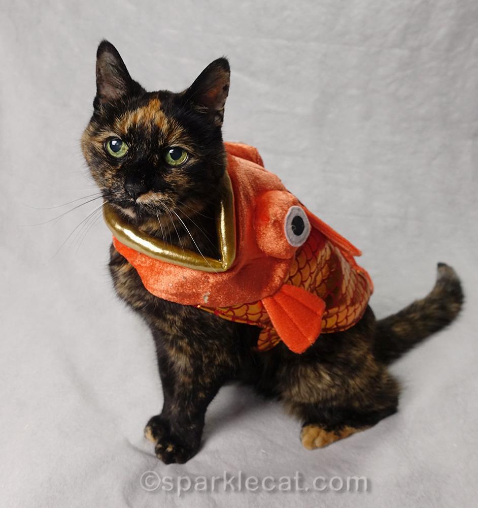 Binga fish