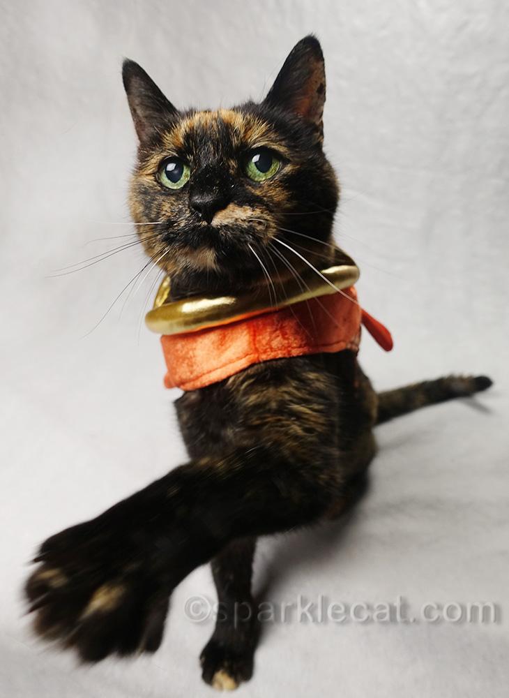tortoiseshell cat in fish costume wanting treats