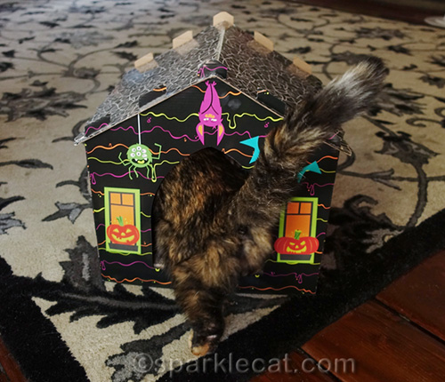 tortoiseshell cat entering haunted house scratcher