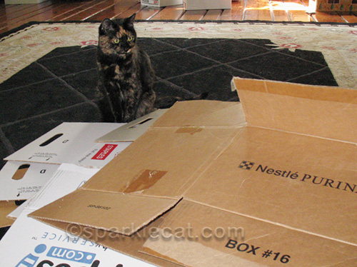 tortoiseshell cat watching boxes being broken down for recycling