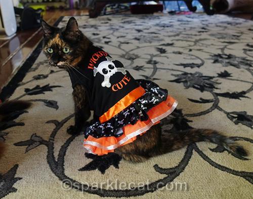 tortoiseshell cat wearing Halloween dress