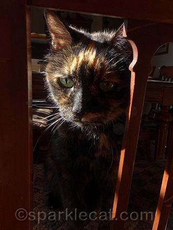 tortoiseshell cat, tortoiseshell cat on wood chair, cat shadow