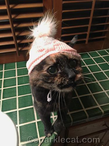tortoiseshell cat in knit cap