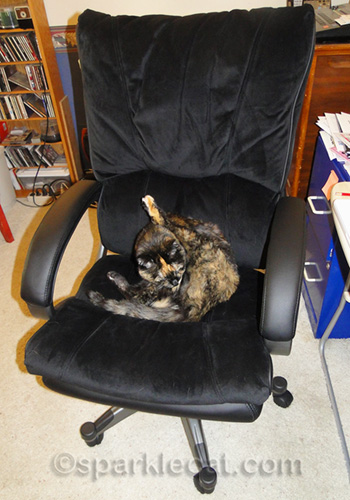 tortoiseshell cat grooming on new office chair