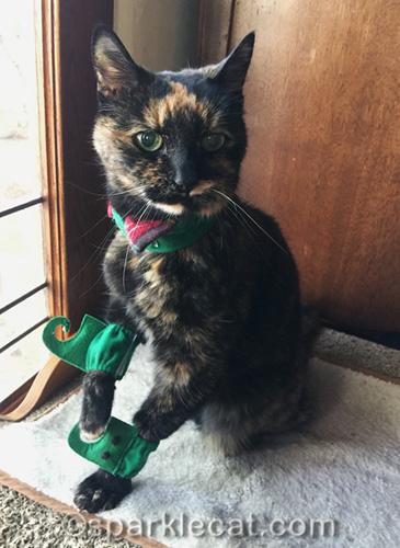 tortoiseshell cat with part of elf costume