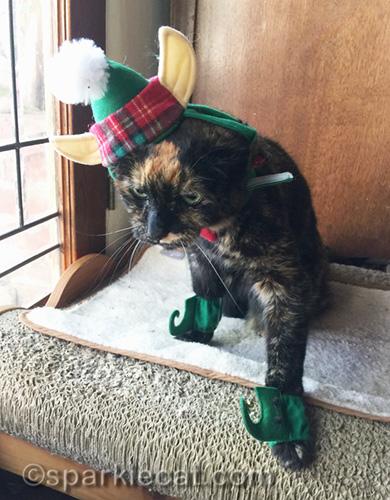 tortoiseshell cat in elf costume, looking awkward