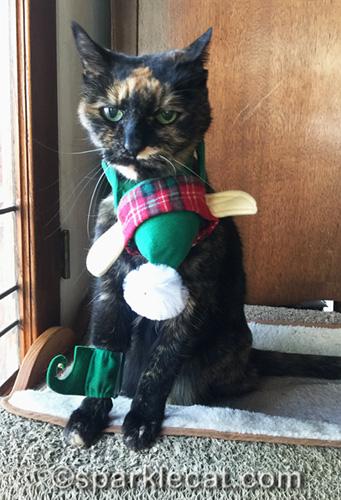 tortoiseshell cat with elf costume in disarray