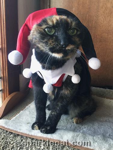 tortoiseshell cat wearing Harley Quinn costume