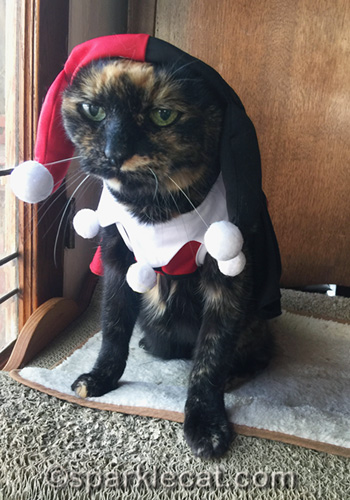 tortoiseshell cat looking unhappy in Harley Quinn outfit