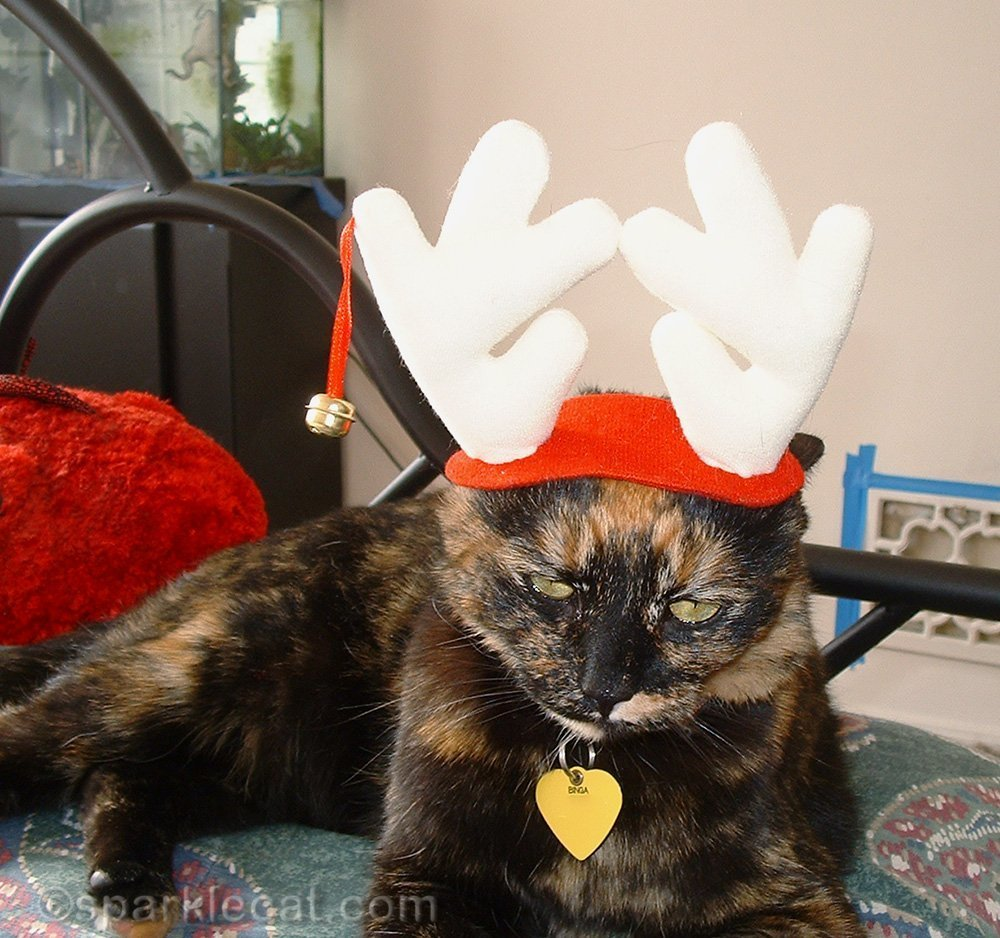 tortoiseshell cat unhappy about wearing reindeer antlers