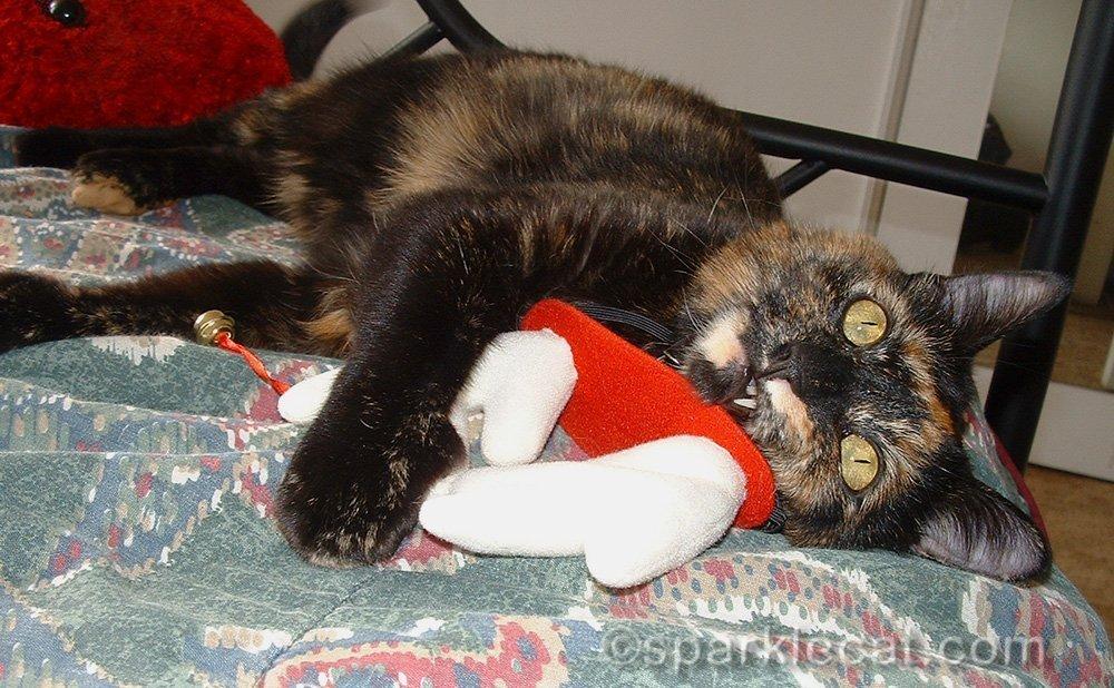 tortoiseshell cat beating up reindeer antlers