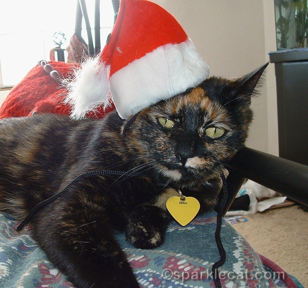 mad tortoiseshell cat wearing santa hat