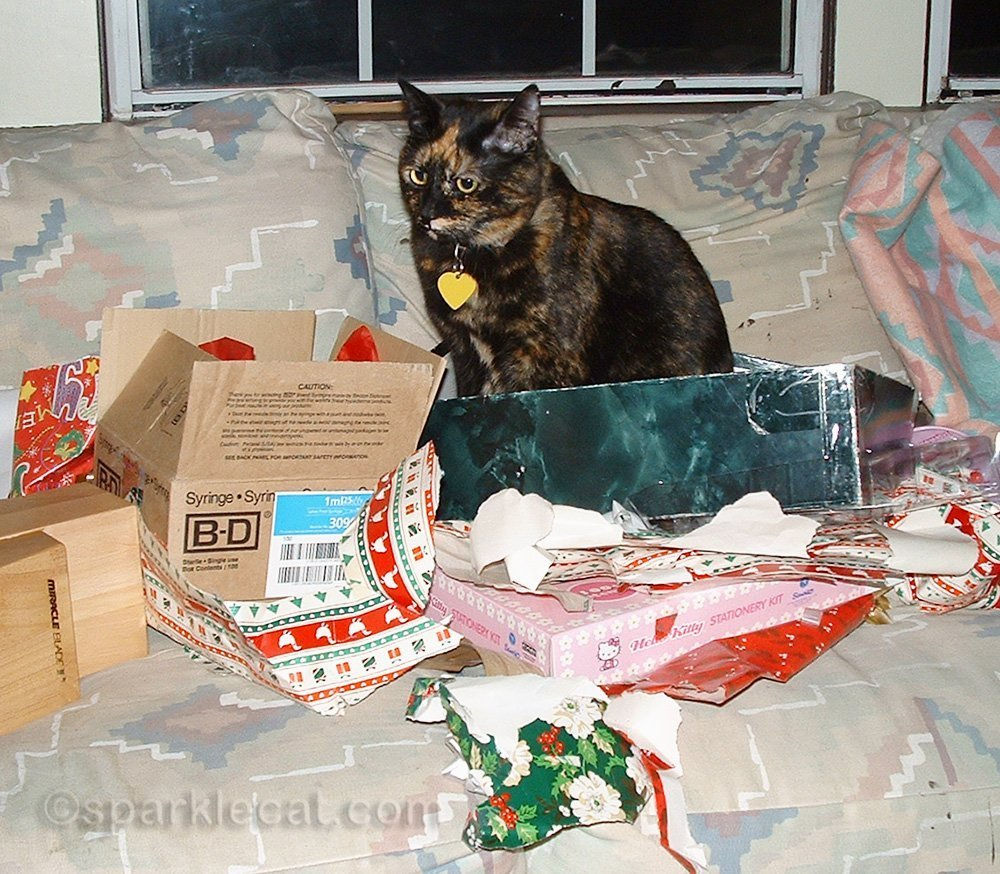 tortoiseshell cat after helping open Christmas presents