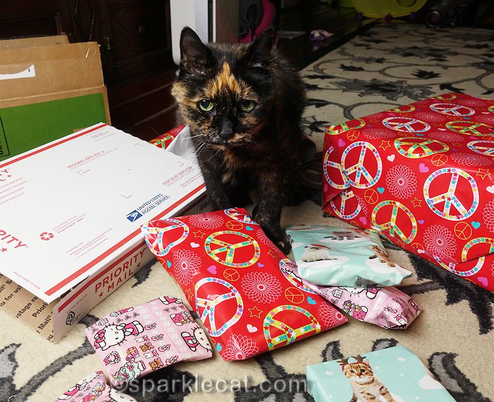tortoiseshell cat with presents