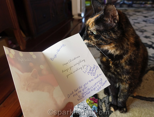 tortoiseshell cat with card from 15 and Meowing family