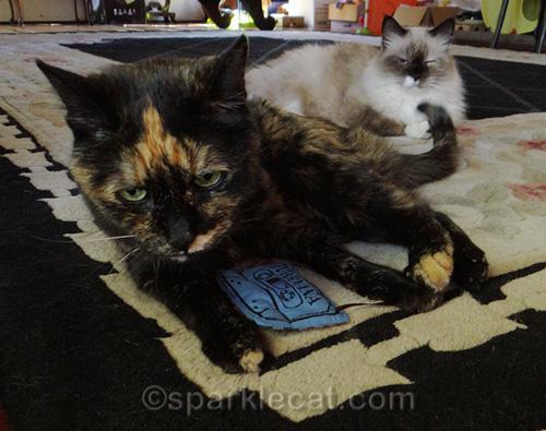 tortoiseshell cat taking possession of Purrvana cat toy