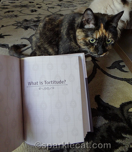 tortoiseshell cat posing with what is tortitude chapter