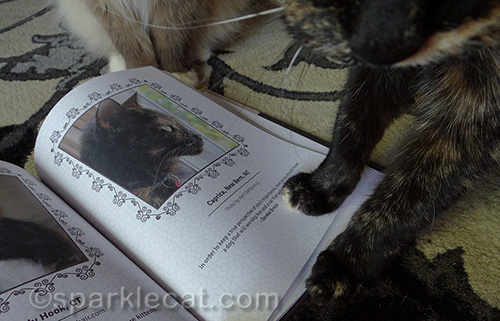 tortoiseshell cat putting her paw of approval on Tortitude book