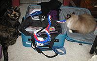 A cornucopia of kitty goodies!