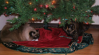 This tree skirt is MINE so I will ignore you