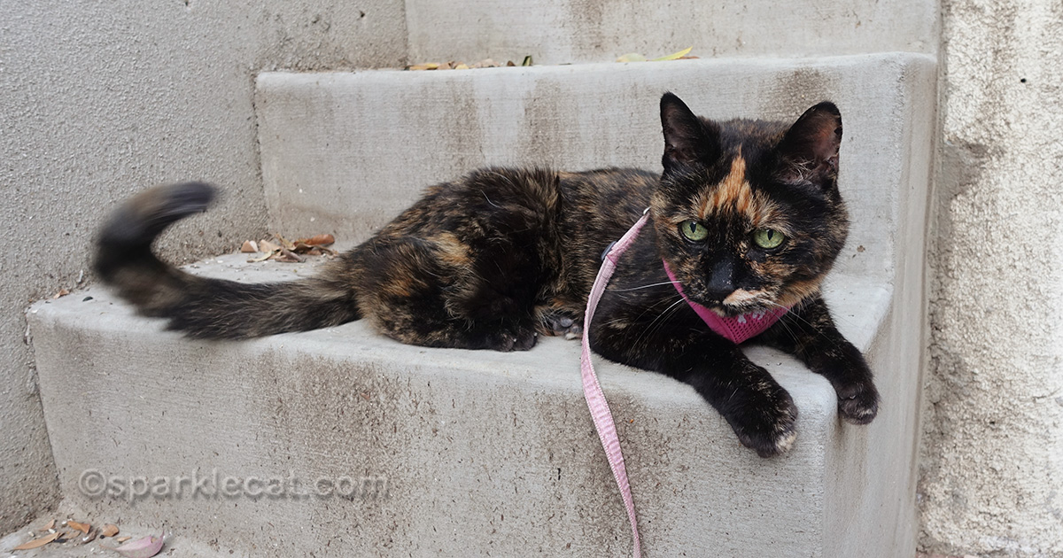 tortoiseshell cat on stairs, flipping tail