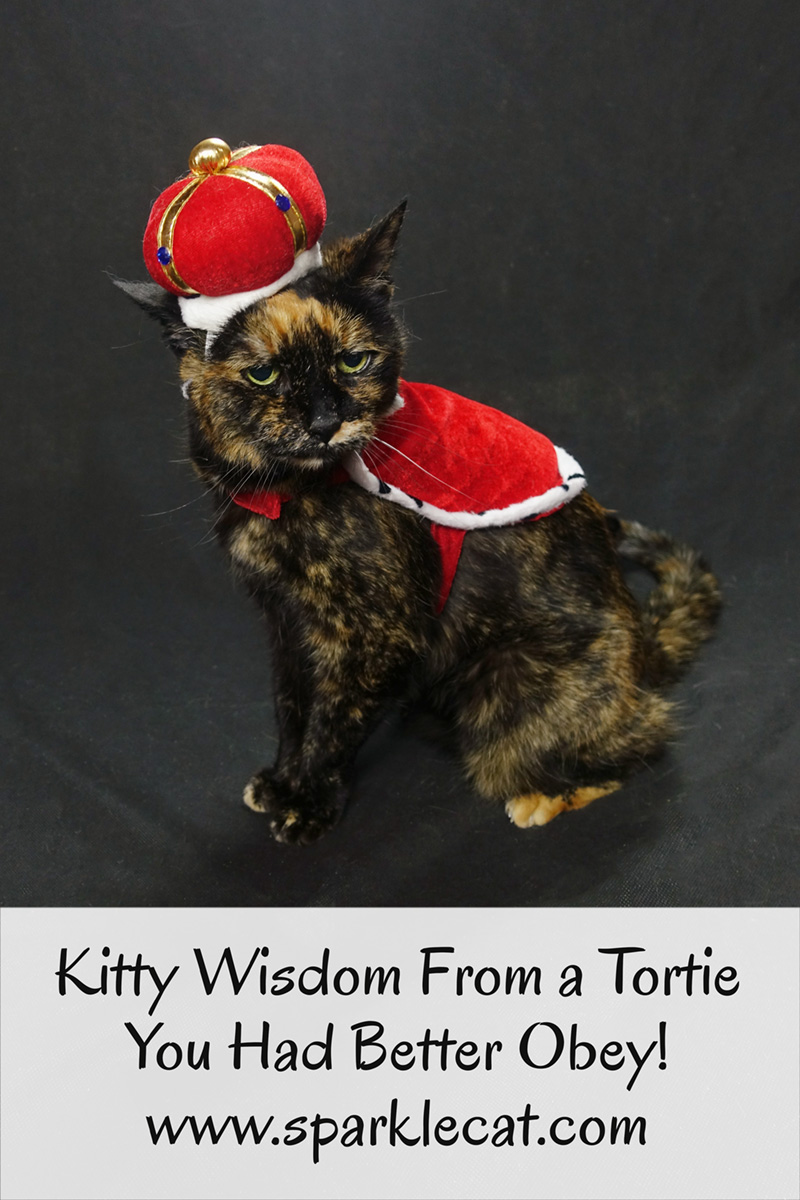 Binga has some tortie kitty wisdom... and you had better obey!