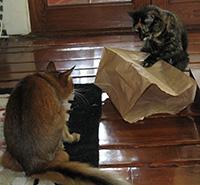 Playing Tag the Bag
