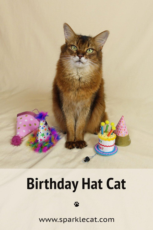 Birthday Hat Cat