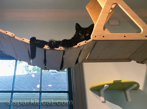 black cat on cat cafe cat walk