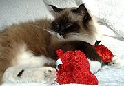 Thinks the stuffed bear is prey