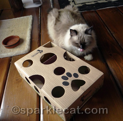 She had no idea she was supposed to put her paw in the holes!