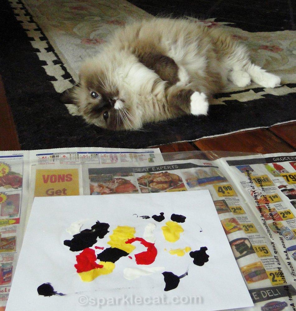 ragdoll cat proud of her work