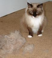 The one-cat fur machine