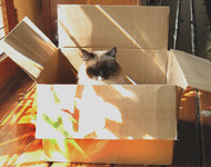 Sun AND a box - a cat's ideal sleeping spot