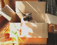 Sun AND a box - a cat's ideal sleeping spot
