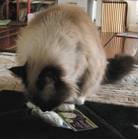 But then, we all know what a catnip junkie she is