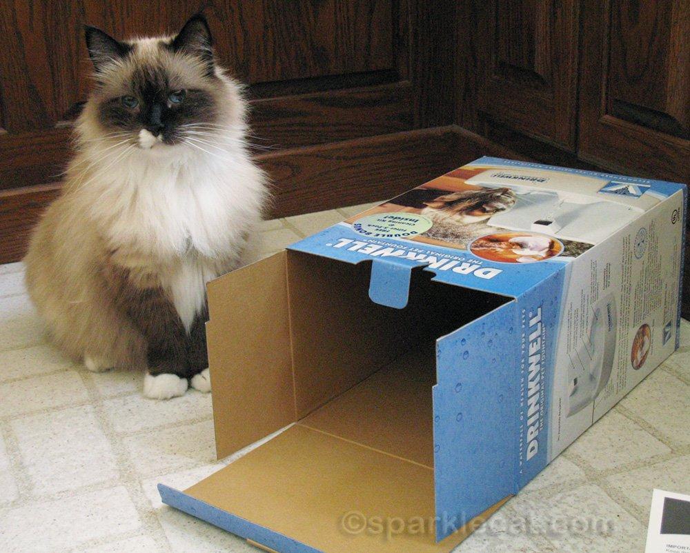 Ragdoll mix cat next to empty Drinkwell box