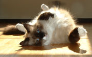 Spends her days sunning