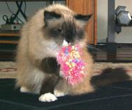 I think she mistook it for something edible
