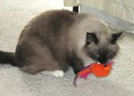 She went back to acting like a freak, pretending her toy was live prey