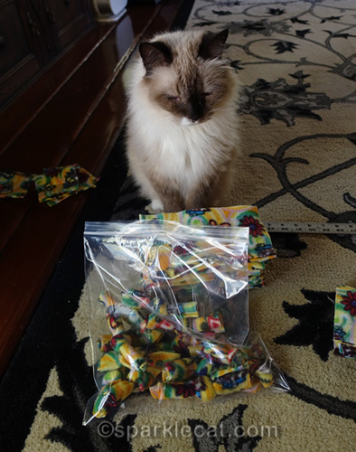 ragdoll cat with bag of nip knots
