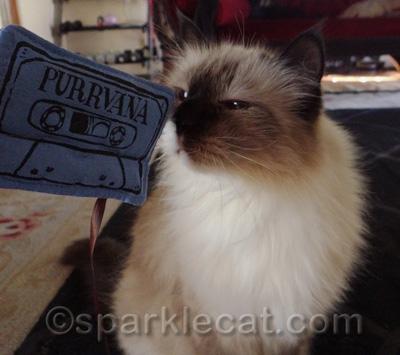Catnip is better than Pennyroyal Tea!