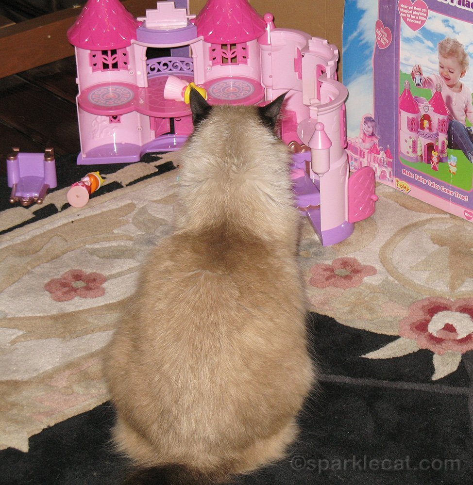 ragdoll cat with kids' castle