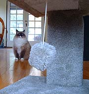 Wasn't the cat tree for everyone?