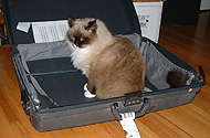 Instead of trying to figure out what's being packed, just add fur to what they'll be packed in